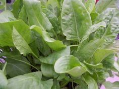 Perennial Vegetables: Years of Bounty | Small Footprint Family