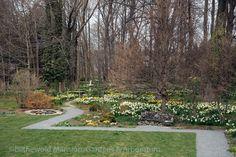 mansion garden, garden april, rhode island, island visitrhodeisland, north garden, blithewold mansion