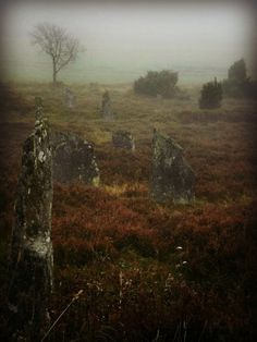 Viking cemetery in Färjås, Sweden. Not all Vikings are buried/burned at sea. The larger the 'stone', the higher the rank