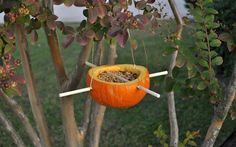 Make A Pumpkin Bird Feeder