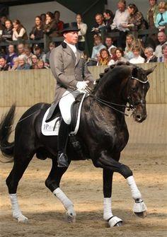 grand prix dressage equestrian   margiekugler.com   Read my book