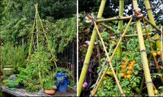 How to Build a Bamboo Trellis Tower — Garden Supplies, Flowers, & Plants in Birmingham | Charlie Thigpen's