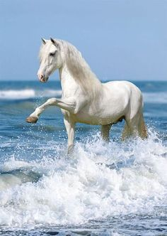 Beautiful White Stallion....