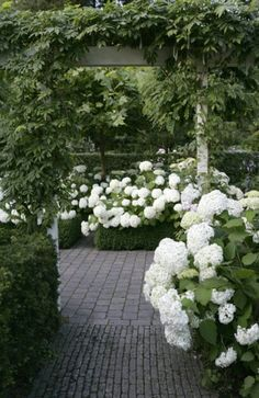 White hydrangeas in a field of green. How simplicity can be so effective. (Of course, we are not disciplined enough for this!)