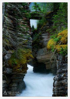 Athabasca Canyon, Jasper National Park, Alberta