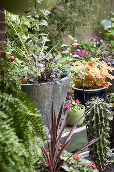 5 Tips for Gardening on the Cheap