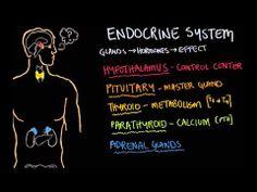Endocrine system intro #science #homeschool