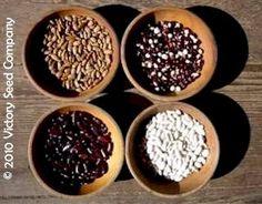 Victory Seeds - Rare, Open-pollinated & Heirloom Garden Seeds