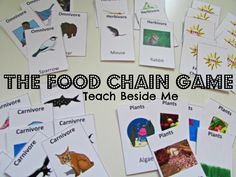 Food Chain game