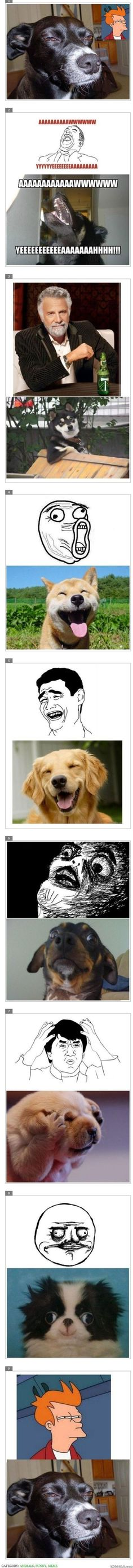Dogs as Meme Characters - http://www.imglols.com/dogs-as-meme-characters/