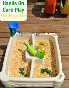 Corn Sensory Play- Fall Sensory Table for hands on play sensory table