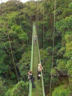 The Infinite Gallery : Monteverde Rain Forest, Costa Rica