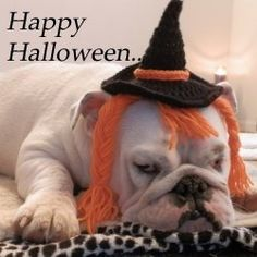 Make this cute witches hat and wig (crochet Pattern) Halloween Crochet Patterns - Dogs not included...lol