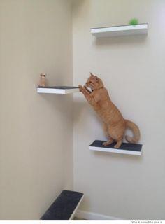 DIY cat perch!
