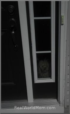 How Much Is That Doggie In The Window :) Cute #WordlessWednesday picture