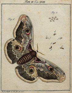 Classis II Papilionum Noctornum