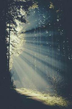 sweet morning light