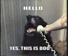 The YES, THIS IS DOG Dog...Haha!!!