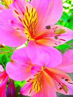 Tropical brights...how beautifully God has decorated His world!