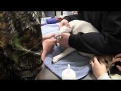 ▶ Veterinary Technician - YouTube  Muscatine Community College introduced its Veterinary Technician program in 2008. We worked closely with area veterinarians in development of the program which includes on-the-job training