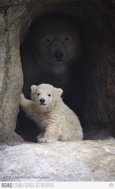 Polar bears :D