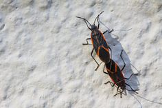 Why Insects Matter | Invertebrates | ReWild | KCET