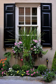 charleston green shutters, window box