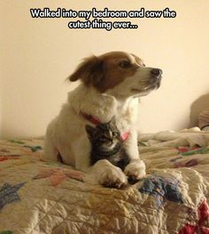 The cutest surprise… cats, funny animals, kitten, dogs, funny animal pics, funny pictures, funni, pet, friend