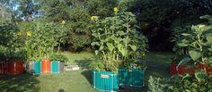 Keyhole Farm keyhole garden site