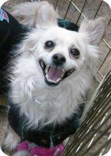 Greyhound Dog Adoption Las Vegas