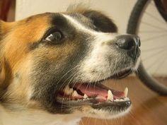 SRD, viralata, dog, cachorro, cão, puppy