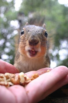 Squirrel #Squirrel #animals