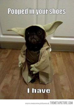 The man, yoda is!
