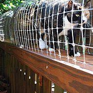DIY outdoor cat-enclosure