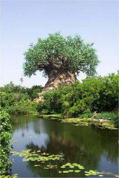 Baobub ~ Limpopo, Mozambique