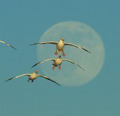 full moon birds