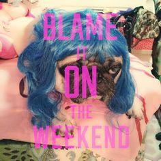Katy Perry look-a-like pug, blame it on the weekend.