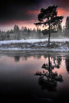 waterfront pine