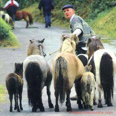 Irish Horse Fair