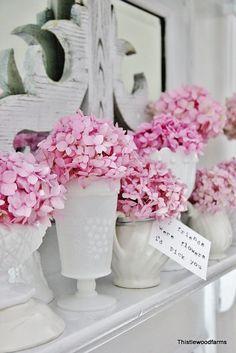 color, teas, farms, coffee, pink hydrangea, garden, bags, flower, hydrangeas