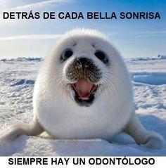 Recuerda : Detrás de Cada Bella Sonrisa Siempre hay un Odontólogo :3 ..... Compártelo !!