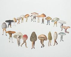 i love Amy Ross...mushrooms and legs.