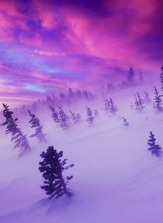 0rient-express:  The Winter Tempest (by Light of the Wild).