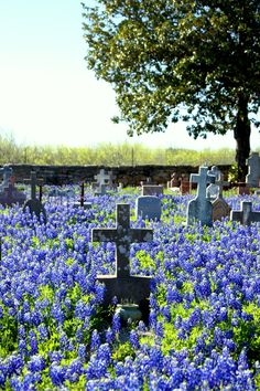 Cemetery in the Texas Hill Country