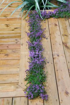 Thymes planted in deck crevices garden ideas, herb, garden borders, patio, deck, porch, flower, bloom plant, stepping stones