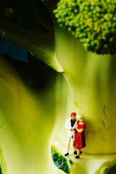 Love under the shade of a broccoli tree