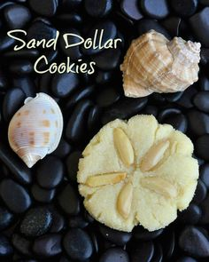 Almond Sugar Cookies - These easy to make Sand Dollar Cookies are a actually a soft and delicious version of almond sugar cookies. Freeze them to have on hand at a moments notice.