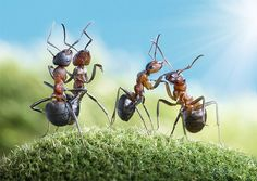 ant tales series by andrey pavlov