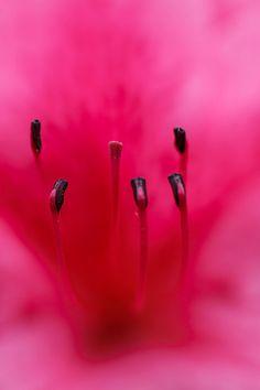 5.1 (Flower Macro)