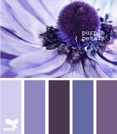 more purple petals